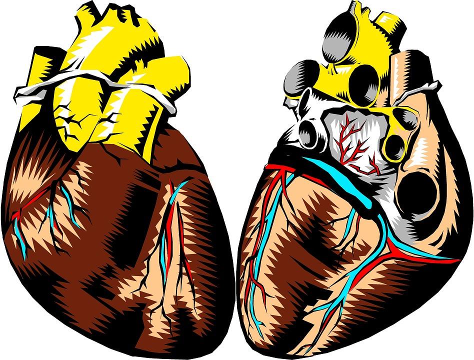 Herz Front Zurück · Kostenloses Bild auf Pixabay