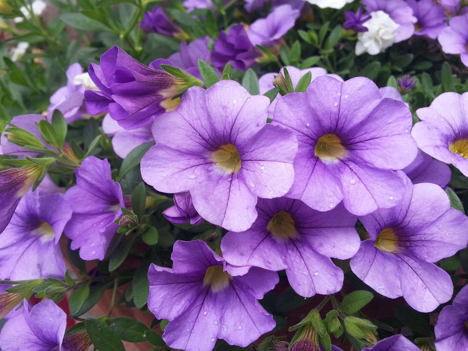 Blume Topf Pflanzen Natur Blumen Farben Polka