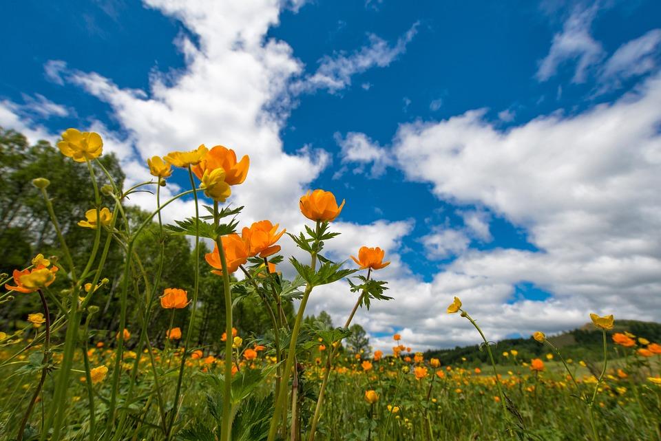 Весна, Цветы, Луг, Лютиковые, Июнь, Деревня Богарт