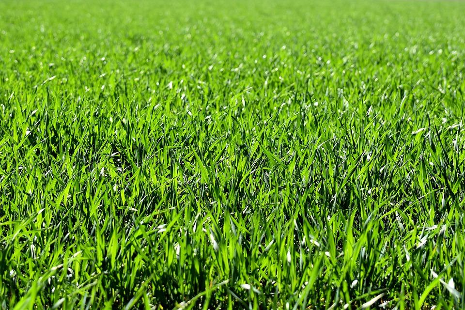 meadow field green  u00b7 free photo on pixabay vector spring letterhead vector springfield il