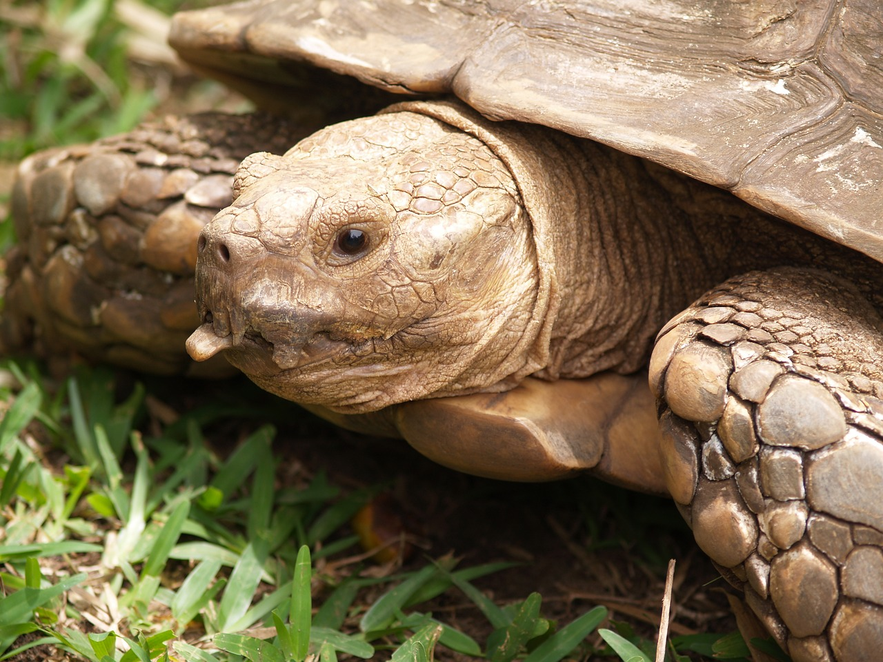 панцирь черепахи картинки персонал уютная атмосфера