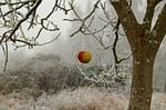 winter, frost, wintry