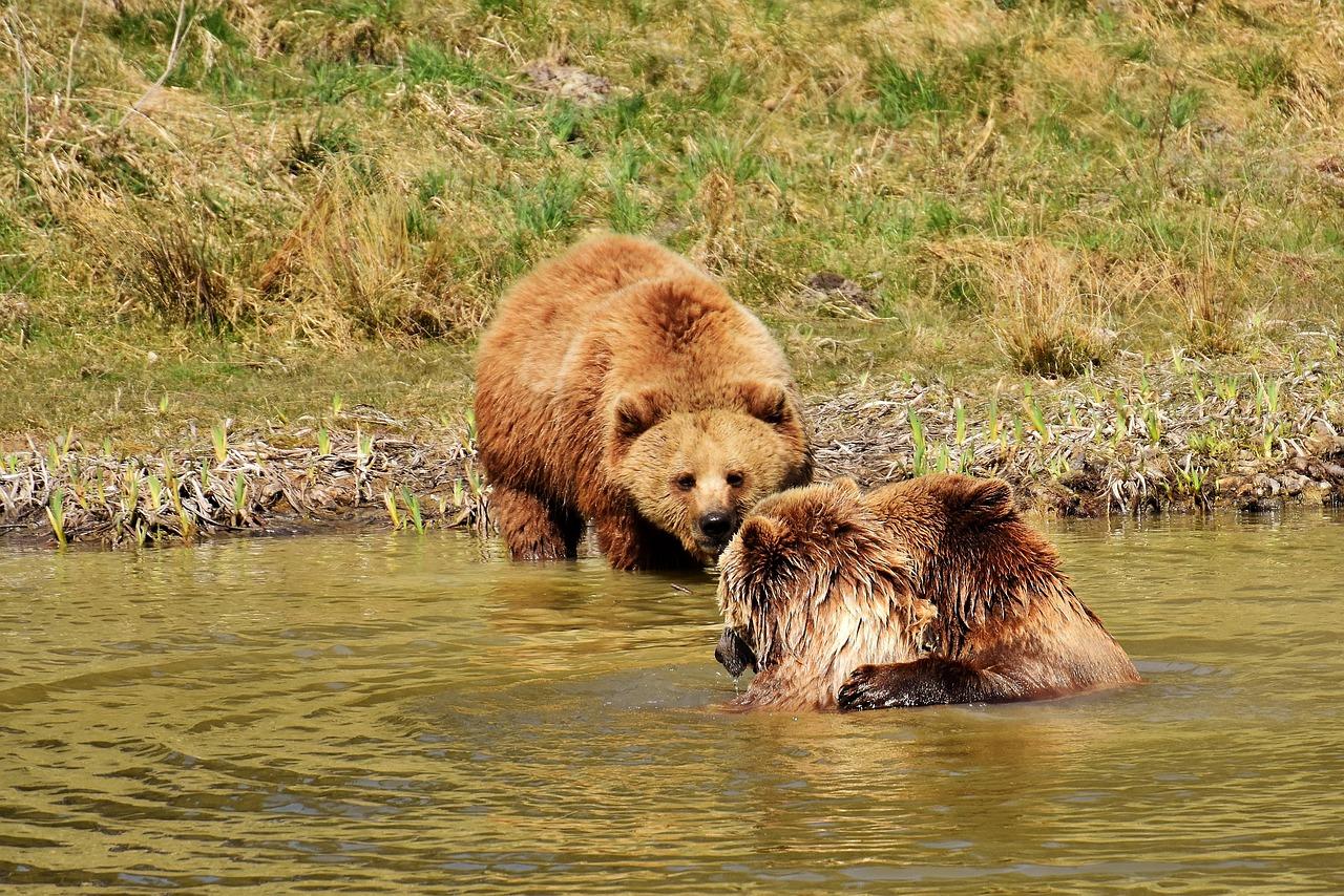 мюнхене лучшее картинки бурый медведь волк расположена