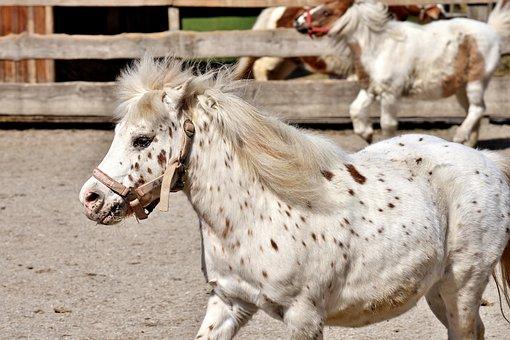 50 horses spielen