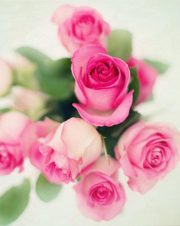 Pink Roses Flowers Romance Romantic Love