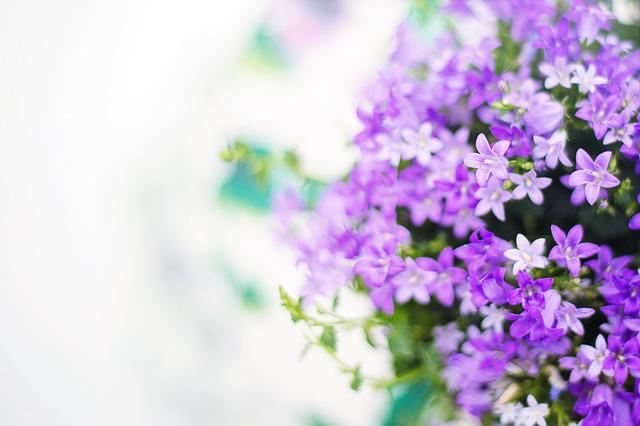 purple flowers spring summer 183 free photo on pixabay
