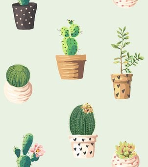 Cactus, Plants, Pots, Flowers, Pattern