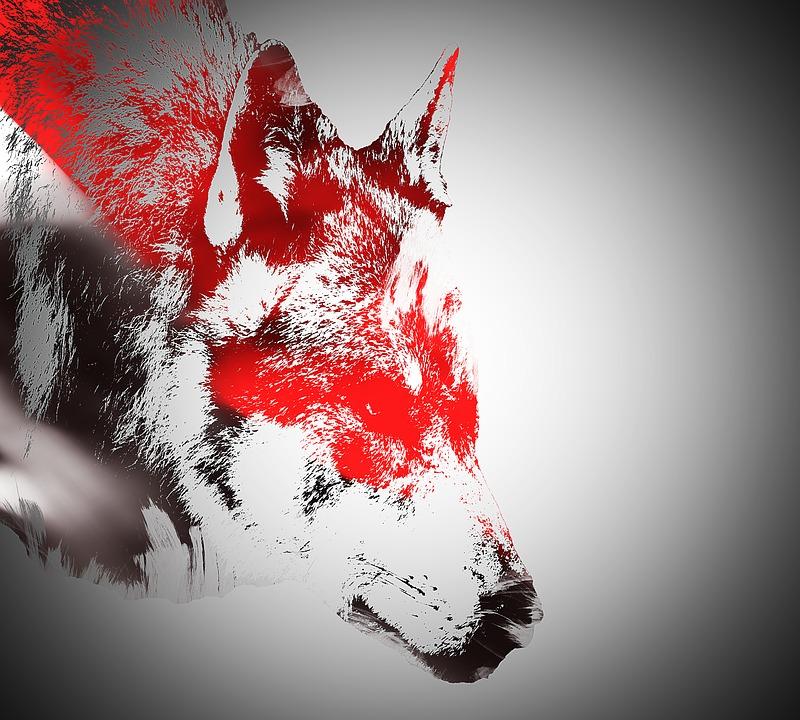 400+ Gambar Abstrak Serigala  Terbaru
