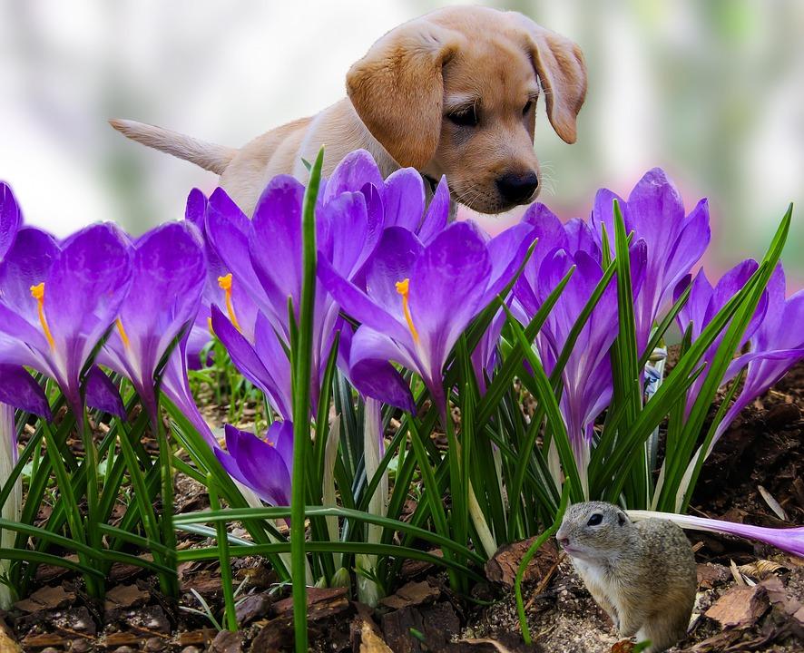 Nature Animals Dog & 183 Free Photo On Pixabay