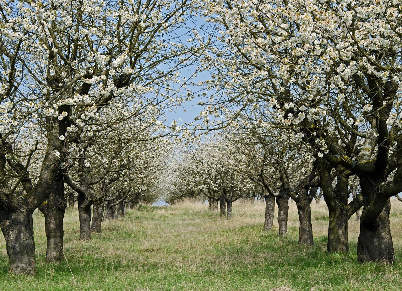 Quel est le moment idéal pour tailler les arbres fruitiers ?