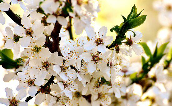 Spring, Blossom, Bloom, Bloom, Nature