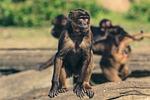 monkey, zoo, animal world