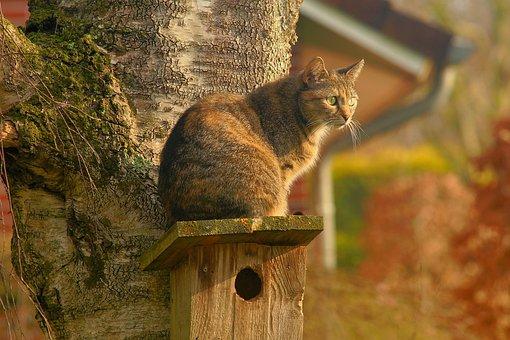 Gato, Gato Doméstico, Jardín, Al Acecho