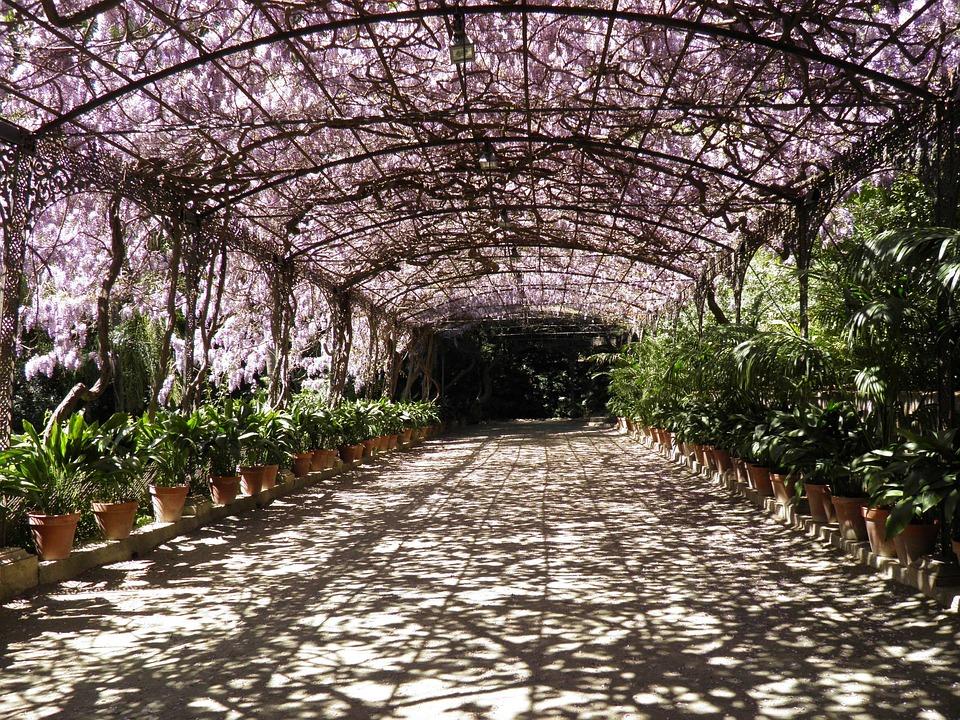 Foto gratis wisteria m laga jard n bot nico imagen for Jardin botanico de malaga