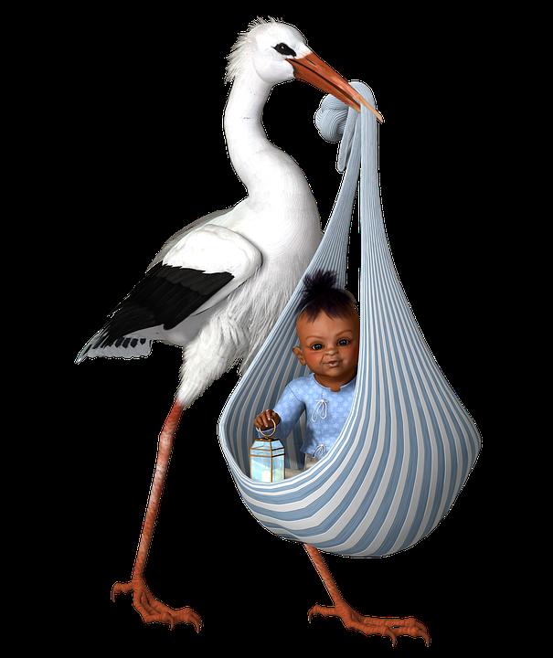 stork and baby child free image on pixabay