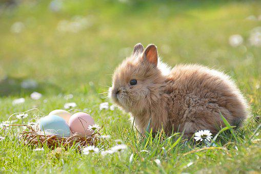Easter Bunny Egg Eggs Happy