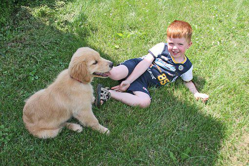 Puppy, Boy, Dog, Cute, Love, Kid, Smile
