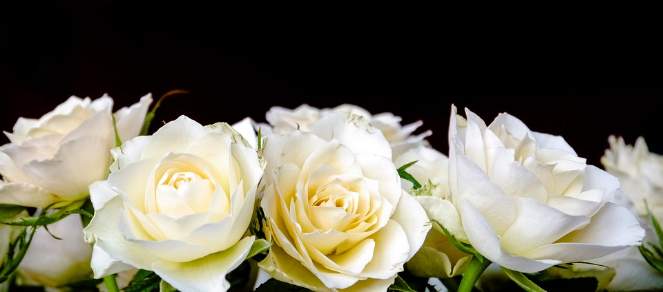 Roses, Bouquet Of Roses, Bouquet, White