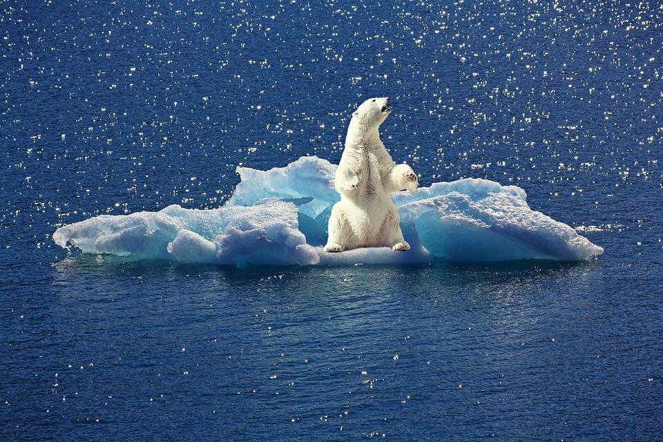 Eisbär, Eisberg, Eisscholle, Nordpol, Klimawandel, Tier