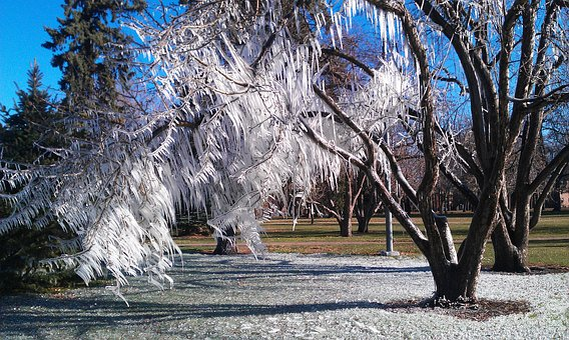 Eis, Baum, Winter, Natur