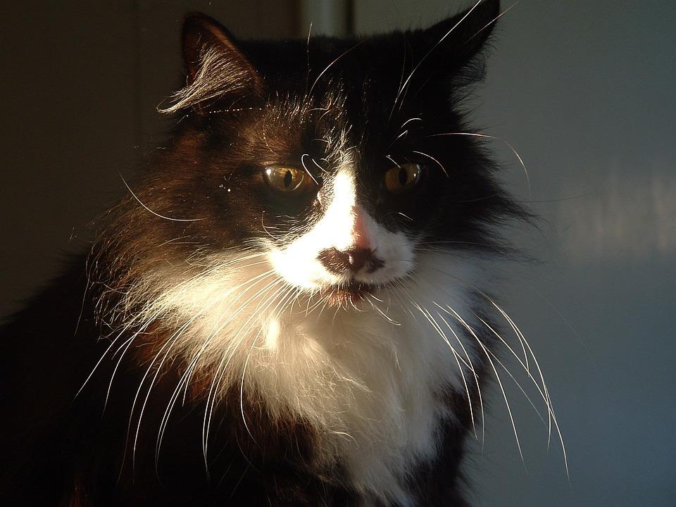 [Image: cat-2200422_960_720.jpg]