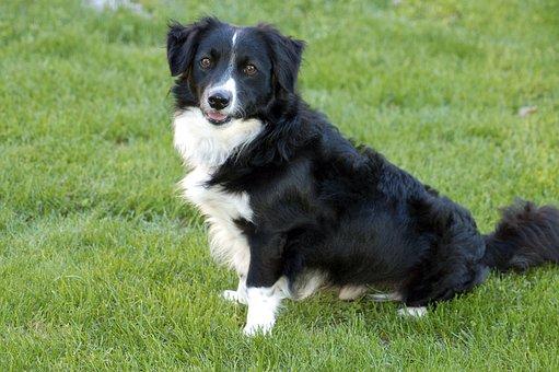 Pet, Dog, Cute, Domestic, Animal, Happy