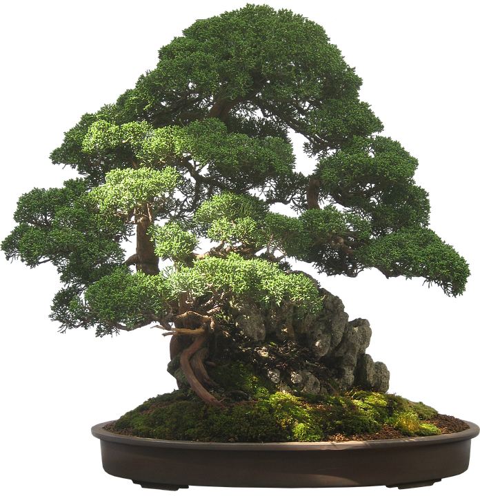 Bonsai tree plant potted free image on pixabay - Dessin bonzai ...