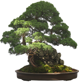 200+ Free Bonsai & Tree Images - Pixabay