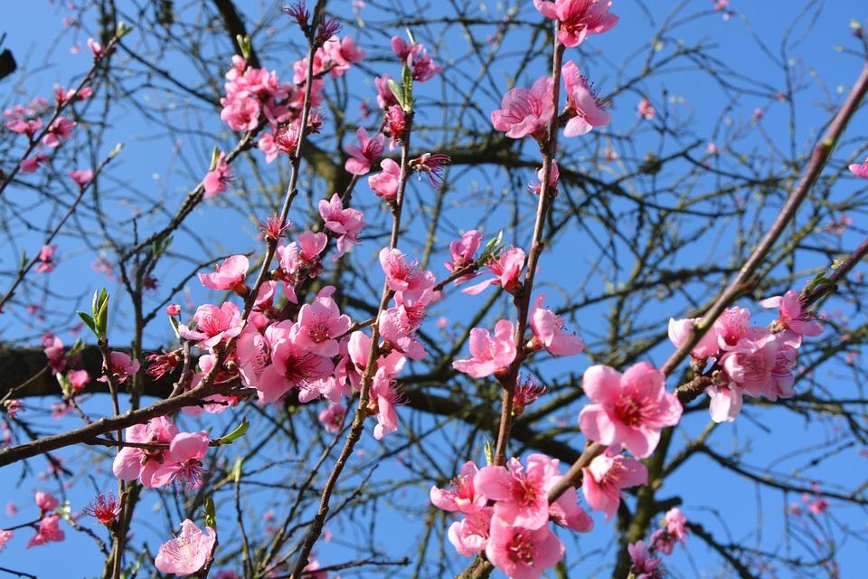 Flores Primavera Color De · Foto gratis en Pixabay