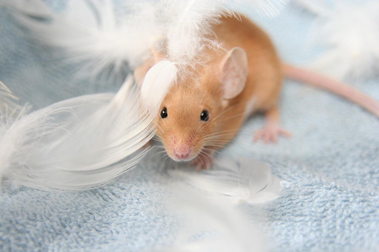 Мышка красивые картинки