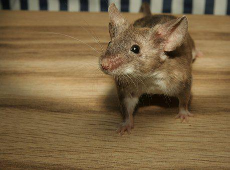 Mouse, Color Mouse, Wood, Cute, Sweet