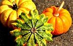 dynie, kolorowy, jesienią