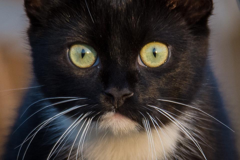 Zblízka fotky černé kočička