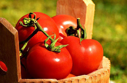 トマトの種類と色別トマトの用途・トマトの品種と分類の仕方
