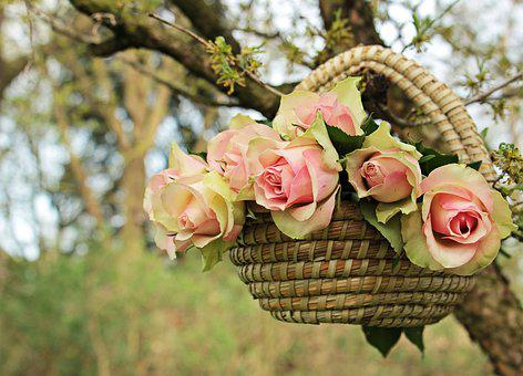 Roses, Noble Roses, Basket, Tree, Branch,Know more about the days leading up to Valentine's day like Rose Day, Chocolate day and Anti-Valentine's day like break up day, slap day and more.