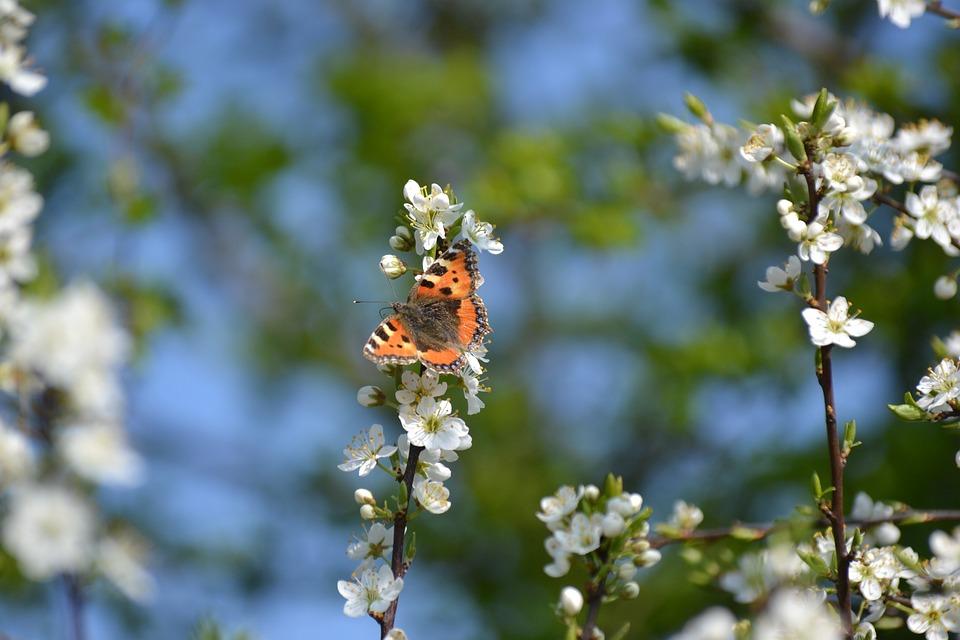 Frühling Blühen Blüten · Kostenloses Foto auf Pixabay