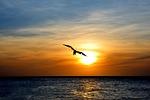 aruba, bird, nature