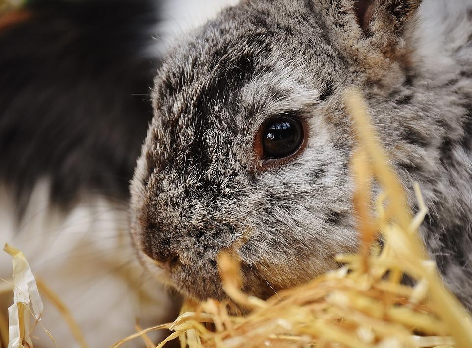 Konijn, Bunny, Haas, Dierlijke, Bont, Pasen, Cute
