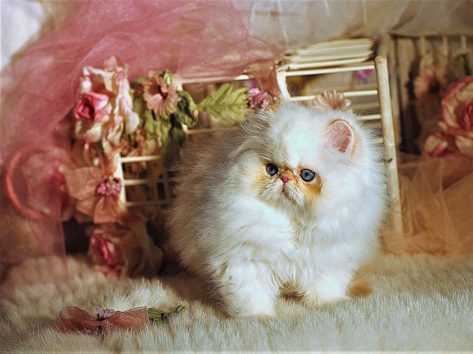 Cat, Miss Nude Fitness, Napoleon