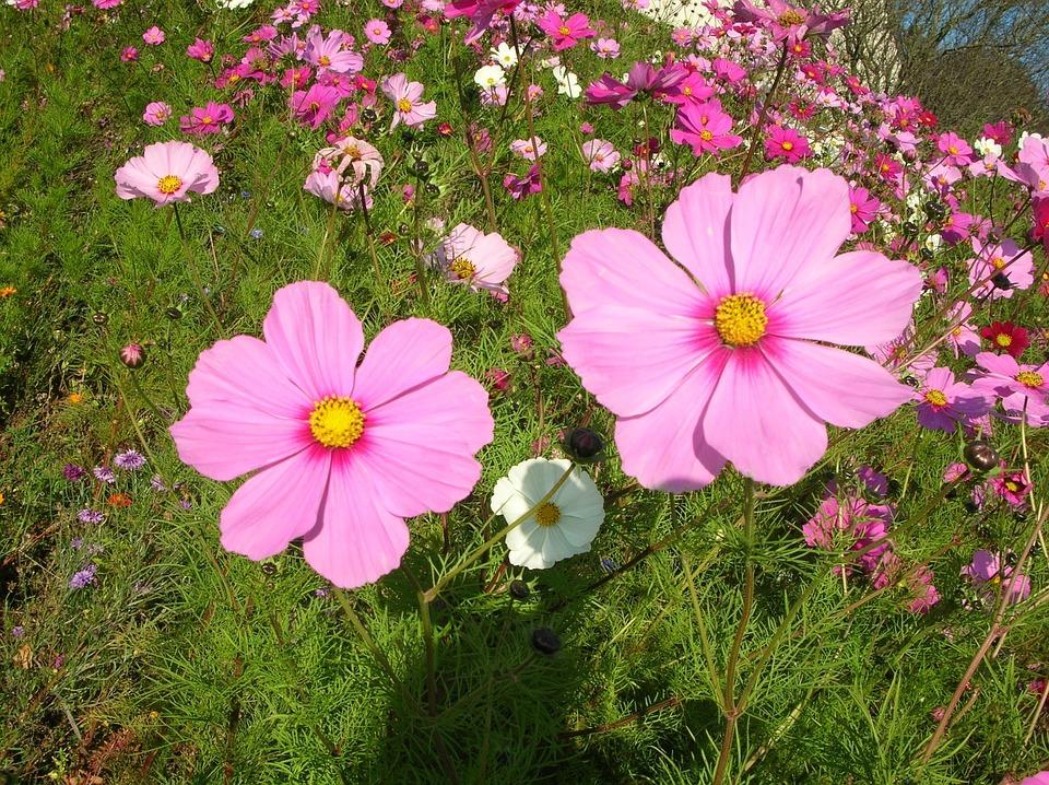 Flowers pretty perfume free photo on pixabay flowers pretty perfume pink nature spring petals mightylinksfo
