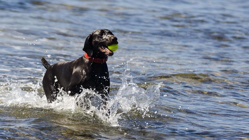 Animal, Sea, Dog