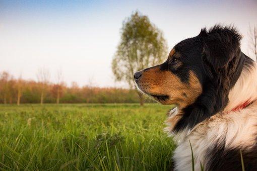 szkolenia psów warszawa