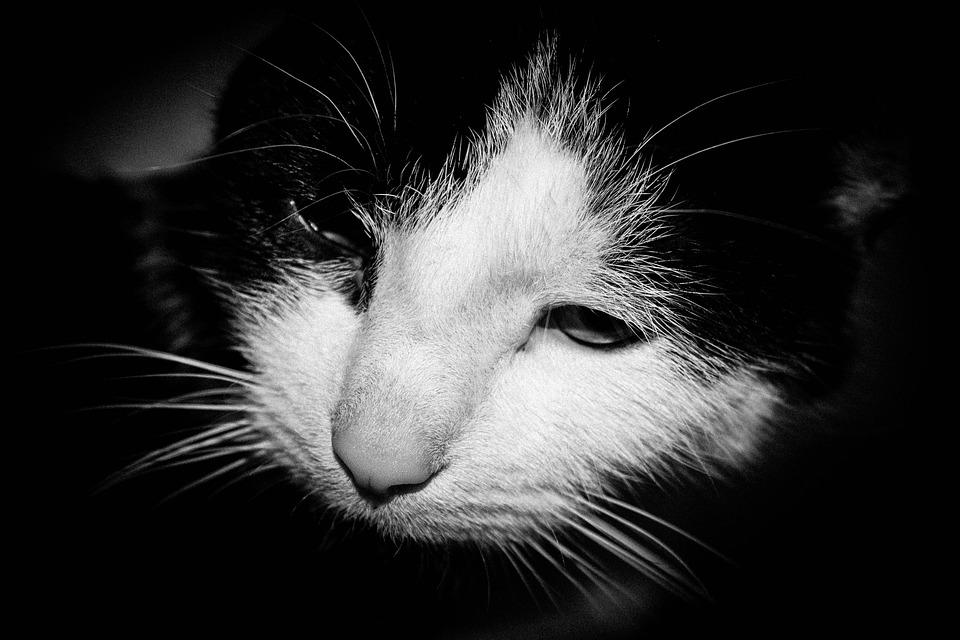 čierna a biela mačička obrázky sexy nakked dievčatá