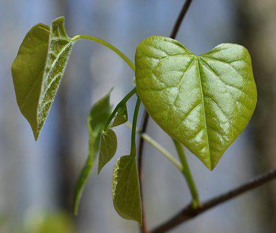 heart shaped leaves images pixabay download free pictures