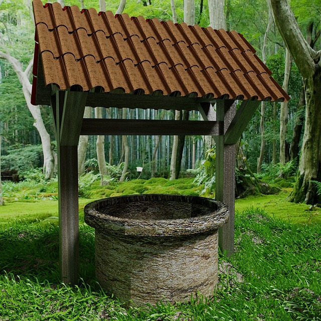Wells, Nature, Forest, Trees, Mushrooms, Landscape