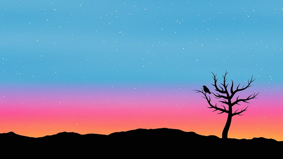 sky tree sunrise  u00b7 free image on pixabay