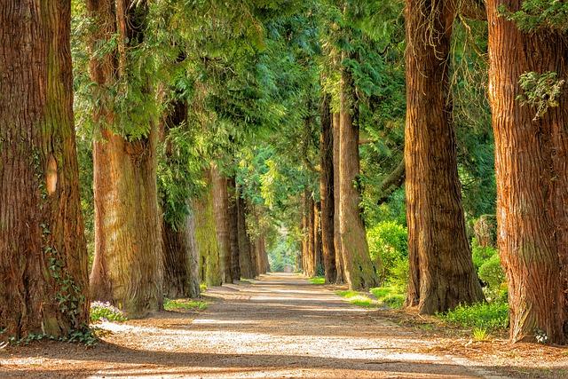 Avenue Trees Away Free photo on Pixabay