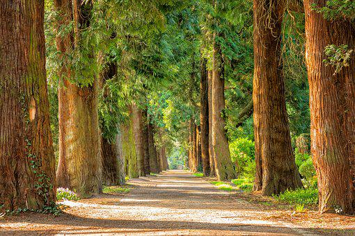 Avenue, Trees, Away, Walk, Green, Nature