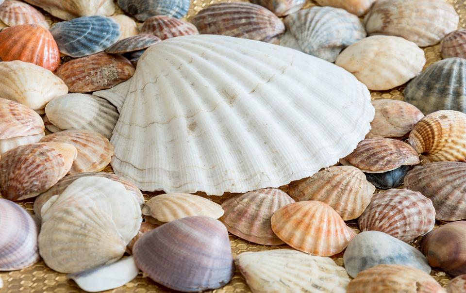 Conchas De Mar Concha Foto Gratis En Pixabay - Fotos-de-conchas-de-mar
