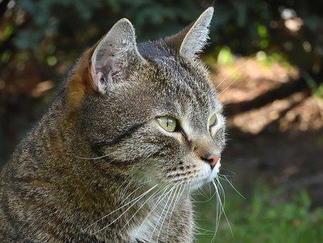 Cat Garden Free images on Pixabay